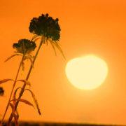 como influyen las condiciones ambientales el funcionamiento